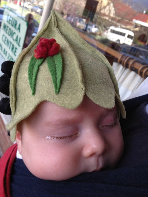 Our gumnut baby!   If anyone's interested you can buy the hat from here