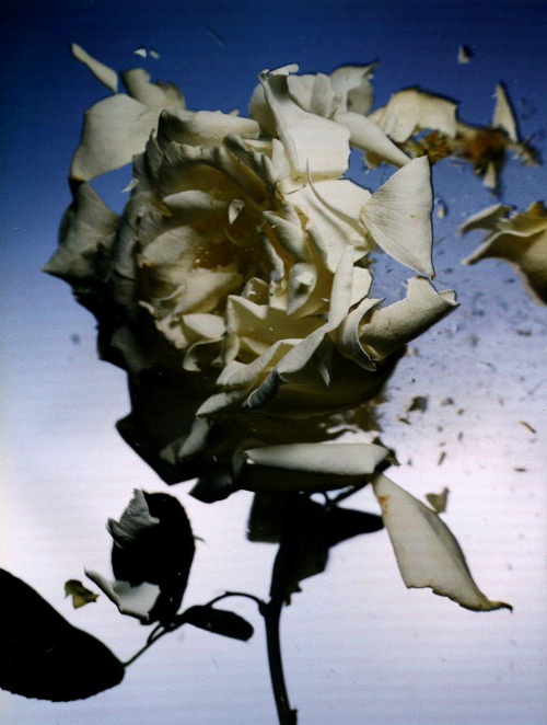 Paradise Lost, photographed by Nick Knight for i-D, October 2005.