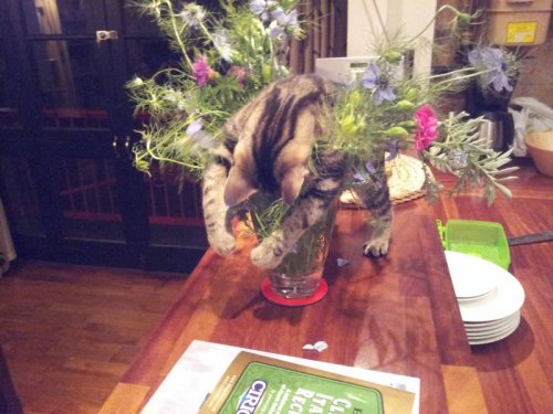 collegehumor:  Cat Passed Out in Flowers Ugh, had a long night chasing that red dot.