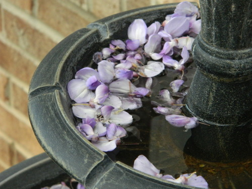 fountain of flowers