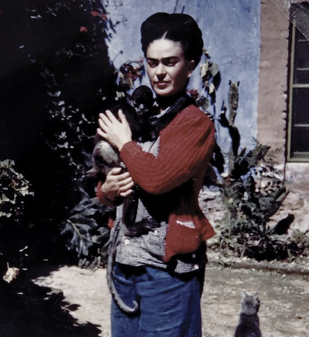 pbsthisdayinhistory:  July 6, 1907:  Artist Frida Kahlo Born On this day in 1907, female painter and wife of fellow Mexican artist Diego Rivera, Frida Kahlo, was born in Mexico City in her famous Blue House.  Known primarily for her striking surrealist self-portraits, Frida was also an avid political activist. The Blue House (La Casa Azul) in which she was born and returned to in her last years is now a museum dedicated to her life. A collection of 6,500 of Frida Kahlo's personal photographs were opened to the public for the first time in 2007 and were placed on display at Artisphere in Arlington, VA earlier this year.  If you didn't get a chance to see the exhibit, you can view some of the photos here, and read a Q&A of curator and photographer Pablo Ortiz Monasterio about putting together the exhibition.