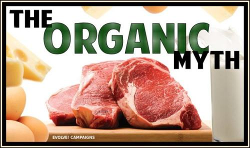 Organic animal foods healthy? We all know that factory farmed meat, milk and eggs are full of antibiotics, hormones and pesticide residues. Organic animal protein however, is still full of disease-causing saturated animal fat and cholesterol, as well as hormones which are naturally present in the animal. All dairy, including organic, is full of naturally occurring hormones, such as estrogen and progesterone, and growth factors including IGF-1, a known cancer promoter. Casein, a protein fraction found in all dairy products is also a cancer promoter and a known allergen. Animal products are a primary source of bacterial pathogens, including campylobacter, salmonella and E. coli, which are the leading cause of foodborne illnesses (food poisoning). Quite simply, a plant-based diet that is naturally low in carcinogens, pathogens, and disease-causing fat and cholesterol, but is naturally high in vitamins, minerals, fibre and disease-fighting antioxidants is the best medicine for promoting a healthy life.Check out a report recently released by the World Preservation Foundation about plant-based diets: http://www.worldpreservationfoundation.org/blog/news/world-preservation-foundation-response-to-epoch-times-on-health-report/