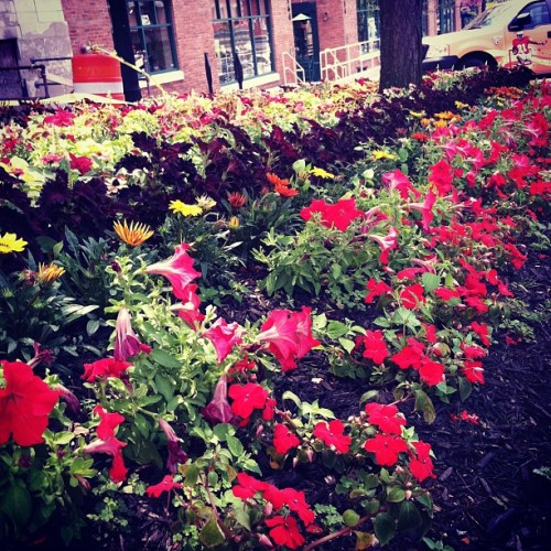 #flowers #downtownkent  (Taken with Instagram)