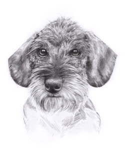 I often get asked to do commissions of peoples pets… heres a drawing I finished off a couple of days ago.Cute dog.