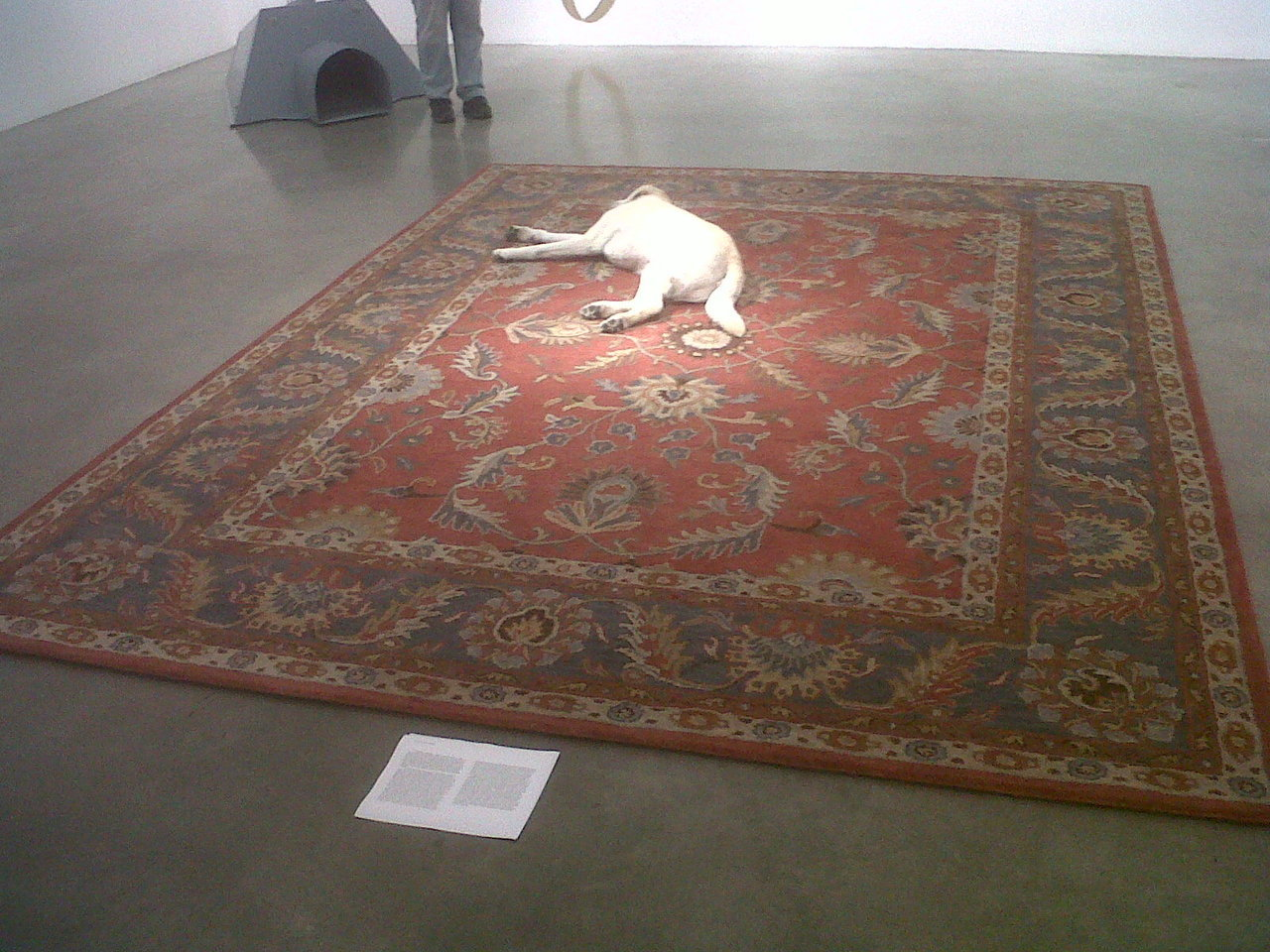 "Nina Beier, ""Tragedy"", persian rug, dog, dimension variable, 2011. Part of the exhibition ""DOGMA"" at Metro Pictures. From the Press Release: «The origin of the term dog days can be traced back to the ancient Romans who attributed the heat of the summer to Sirius, the brightest star in the night's sky, which they referred to as the Dog Star due to its position in the constellation Canis Major (Large Dog). Dog days were long believed to be maddening and wicked times that turned food and wine sour and pushed man to hysteria. The sweltering days of July and August then are the perfect time to exhibit works that look beyond the cuddly cuteness of dogs to focus on the idiosyncratic, interconnected fates of man and his best friend»."