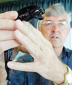 Dr. Peter Herring displays a black dragonfish, a deep-sea fish found at a depth of about 1,000 meters. Scientists believe it might use its luminous cheek patches to communicate. -By Craig T. Kojima, Star-Bulletin  No, NO. That is a chestburster. Motherfucker's holding a fucking chestburster.