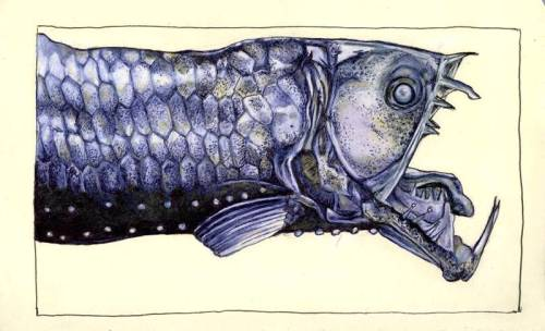 moleskine : viperfish by ~Cephalopodwaltz