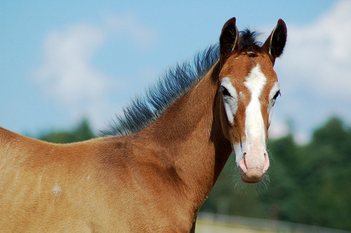 hoofimprints:  Equine by Cinawa on Flickr.