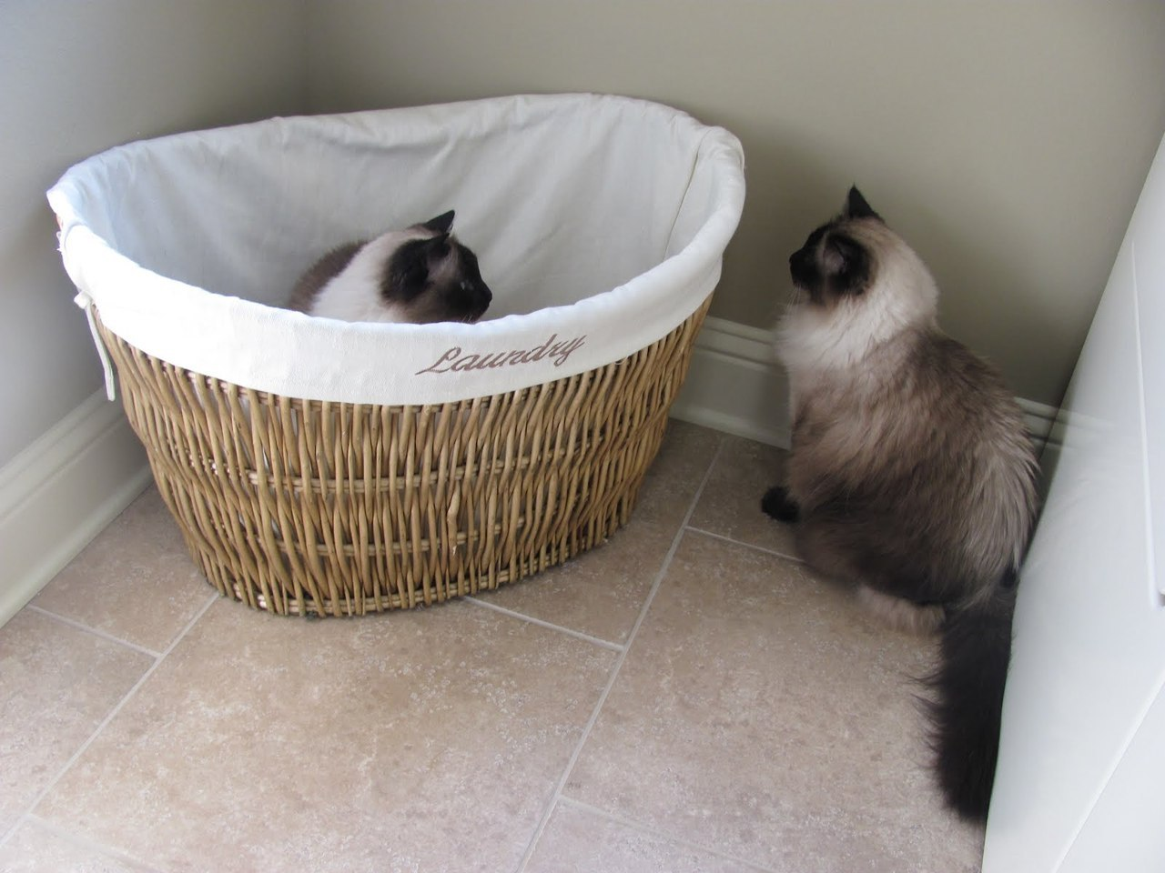 """Get off! It's my turn now!"" Photo by ©Jacqueline's Cat House"