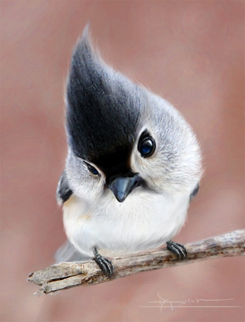 lalulutres:  beautiful picture of a tufted titmouse……love those eyes