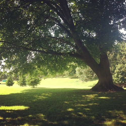 A pleasant day off. Enjoying the trees. (Taken with Instagram at Fernhill Park)