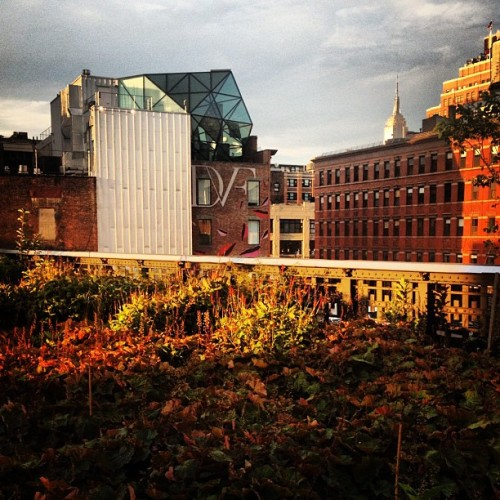 #dvf #highline #empirestate  (Taken with Instagram)