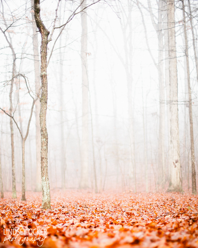 Forest of fog, blanket of orange - Now for sale here