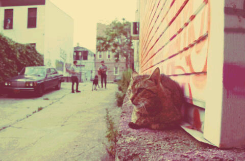 This Brooklyn Cat.