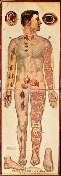 fuckyeahmedicaldiagrams:  White's Physiological Manikin, James T. White & Co., New York, 1889