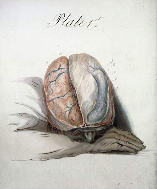 fuckyeahmedicaldiagrams:  Watercolour of the Brain by Sir Charles Bell - Plate 1, 1823