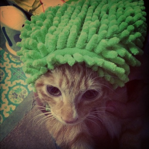PHOTO OP: Rasta Kitty Via Aryana Williams.