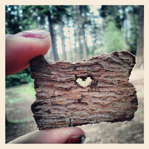 cubismmdream:  i carved the shape of Oregon from bark