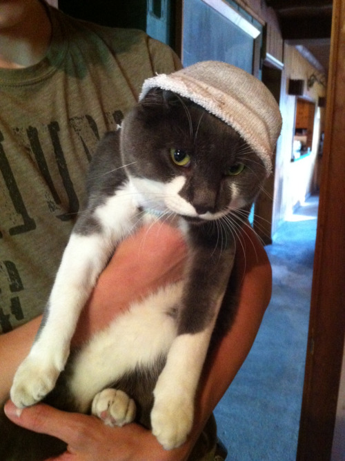 Thug kitty