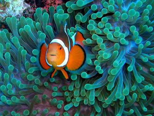 hotsummerair:  hey guys, i found nemo.