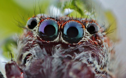 spider eyes by FISHNROBO on Flickr.