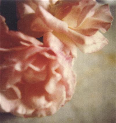 La Vie En Rose - photo by Cy Twombly