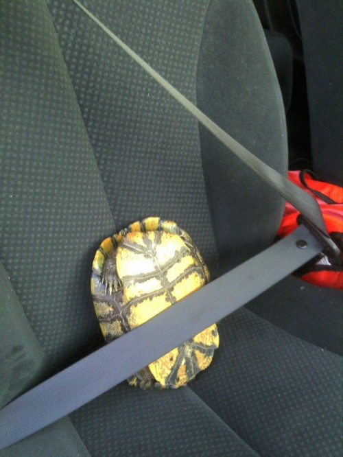 thefrogman: Safety first.