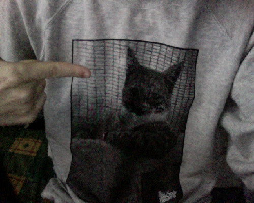 brucechillis:  this jumper rules, because IT HAS A CAT ON IT