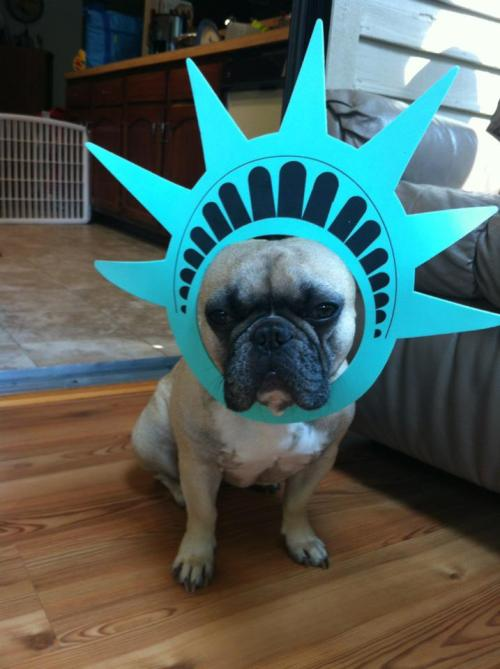 Poey loves America.