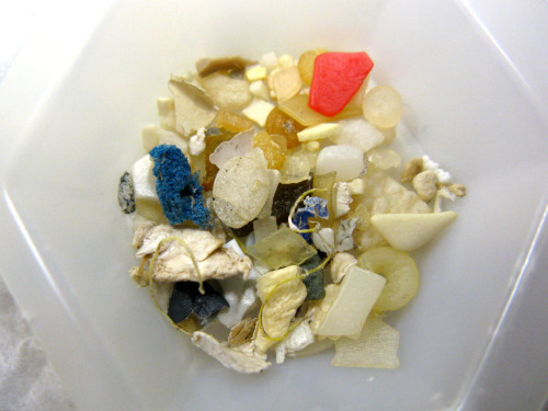 laboratoryequipment:  Birds' Stomachs Show Extreme Plastic Pollution LevelsPlastic pollution off the northwest coast of North America is reaching the level of the notoriously polluted North Sea, according to a new study led by a researcher at the Univ. of British Columbia.The study, published online in the journal Marine Pollution Bulletin, examined stomach contents of beached northern fulmars on the coasts of British Columbia, Canada and the states of Washington and Oregon.Read more: http://www.laboratoryequipment.com/news-Birds-Stomachs-Show-Extreme-Plastic-Pollution-Levels-070612.aspx