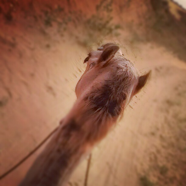 Riding through the desert.  (Taken with Instagram)