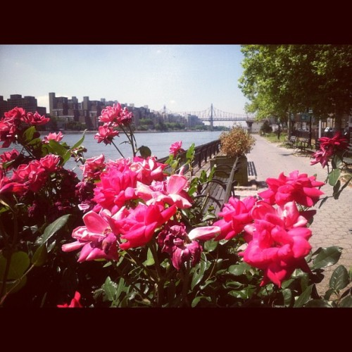 Taken with Instagram at East River Running Path
