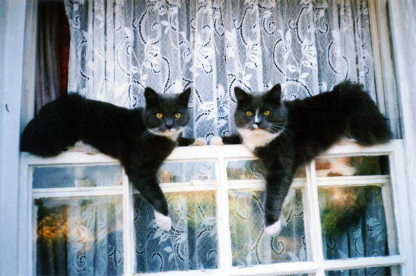 Smokey and Bandit are 10 years old today. Happy Birthday!  Photo via Just Cats