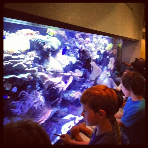 It's Finding Nemo, I mean aquarium time! #summerclub2012 (Taken with Instagram)
