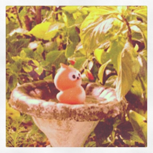 #zingy #cute #want it #adorable  (Taken with Instagram)