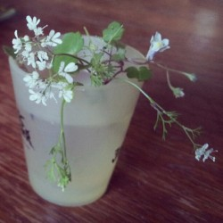#tiny #shotglass #vase #flowers #cilantro #BlackDahliaMurder (Taken with Instagram)