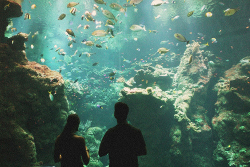 abbreviateddaylight:  Aquarium= perfect date.