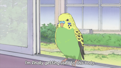 courteousaviarist:  fuckyeahbudgies:  and what an adorable body you have  OK FUCK CAN WE PLEASE HAVE AN ANIME STRICTLY ABOUT BIRDS LIKE HAMTARO BUT BIRDS OH GOD PLEASE