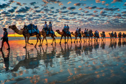 spectral-ozone:  Camels at Sunset, Cable Beach W.A by Symoto on Flickr.