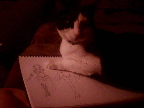 No, Cat, I am trying to sketch here.
