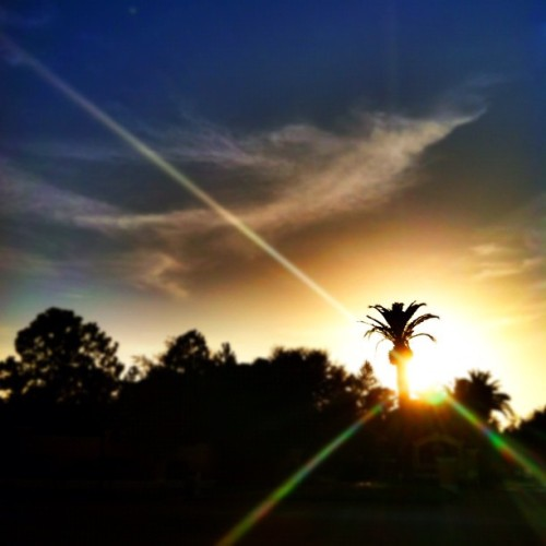 #sun #sunset #sky #palmtree #florida #glare #iphone #iphonesia #iphoneonly #ikonic  (Taken with Instagram)