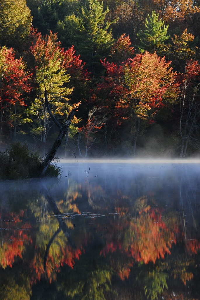 mer-de:  Foggy Foliage Sunrise Over the Souhegan River