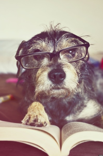 25 pictures of dogs reading. (via BuzzFeed)
