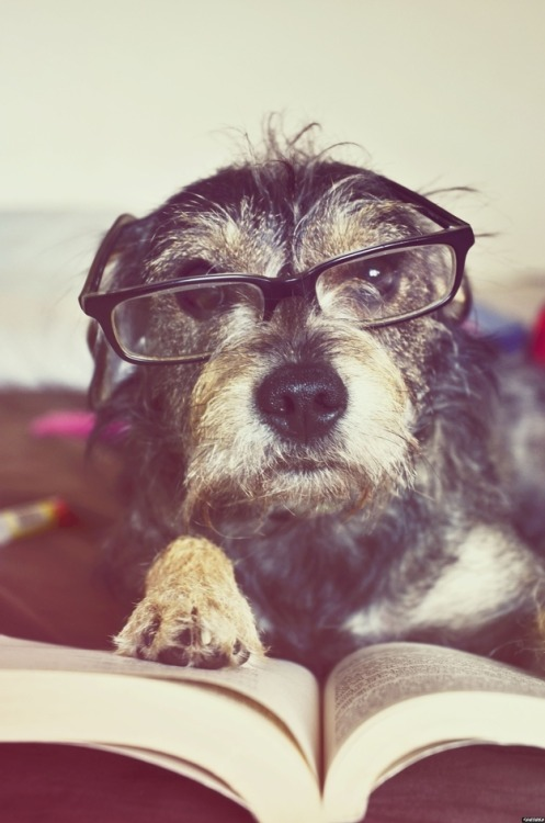 irisblasi:  25 pictures of dogs reading. (via BuzzFeed)