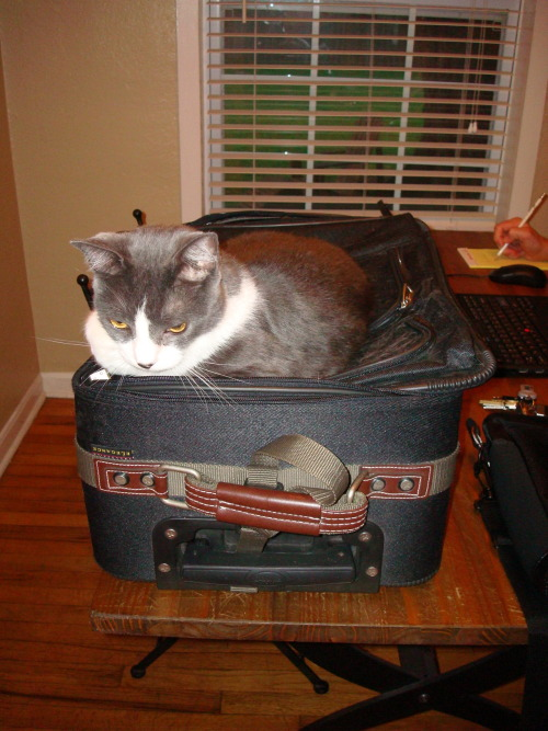 get off there cat. you are not going on this trip. you would hate vegas.