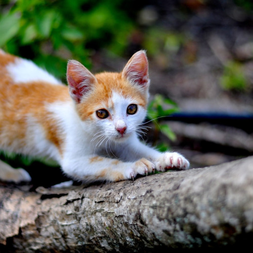 photogenicfelines:  (by Jesus Martinez,)