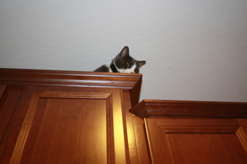 get down from there cat. it's a new house. you will get used to it.