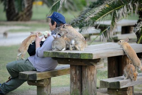 "pogonophilic-cat:   ""Ōkunoshima (大久野島) (…) is often called Usagi Shima, or Rabbit Island, because of the numerous wild rabbits that roam the island; they are rather tame and will approach humans."" (Source)   Dudes. I'm going on a road trip. I've gotta visit the island of bunnies and island of cats.   SOMEONE TAKE ME TO THIS ISLAND!!!!"