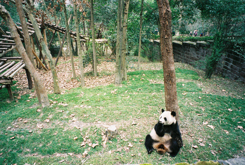 gildings:  new year panda君 by zmtlilymaria on Flickr.   Peaceful but deadly.