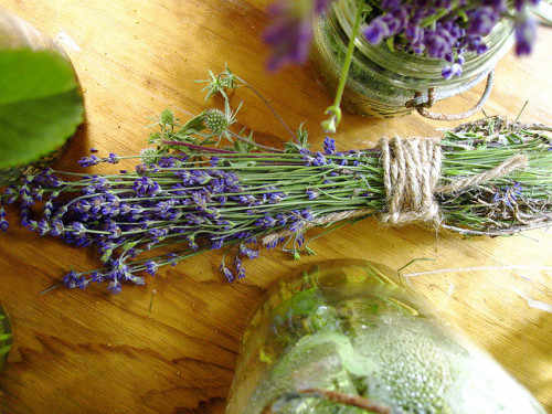 Lavender by littlewonderpics on Flickr.